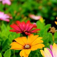Chelsea Flower Show & RHS Wisley Gardens