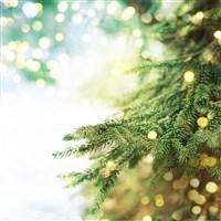 Christmas in Babbacombe