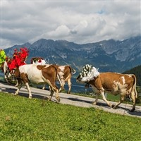 Austria, Almatrieb Festival