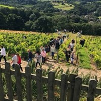 Yorkshire Boats & Vines