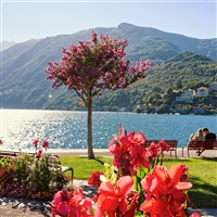Camellias in Bloom on Lake Maggiore