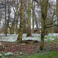 Yorkshire Snowdrops & Gardens