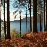 Scottish Autumn Gold Trip