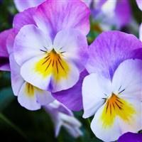 Costa Brave Gardens & Girona Flower Festival