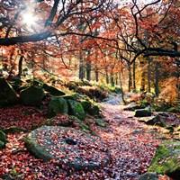 Glorious Autumn Colours